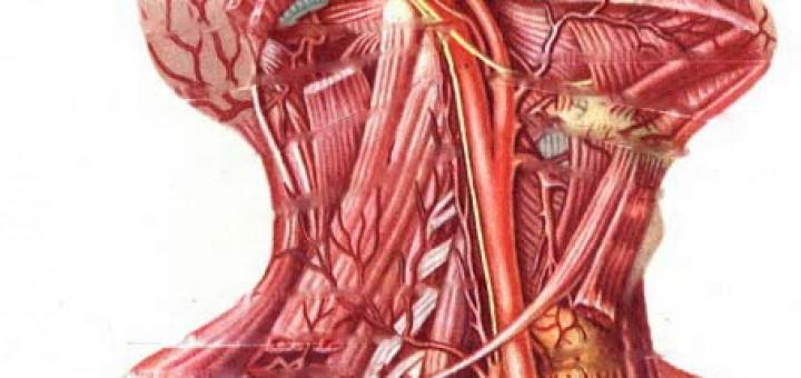 Karotis Hastalığı
